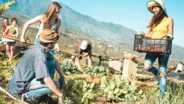 Innovación social: una herramienta imprescindible para las zonas rurales marginadas