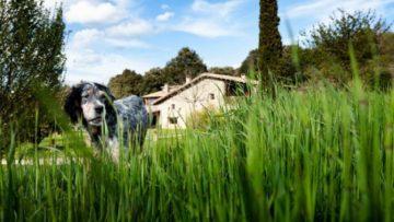 El 89,4 % de los viajeros planea hacer turismo rural en España en 2021, según el Observatorio del Turismo Rural