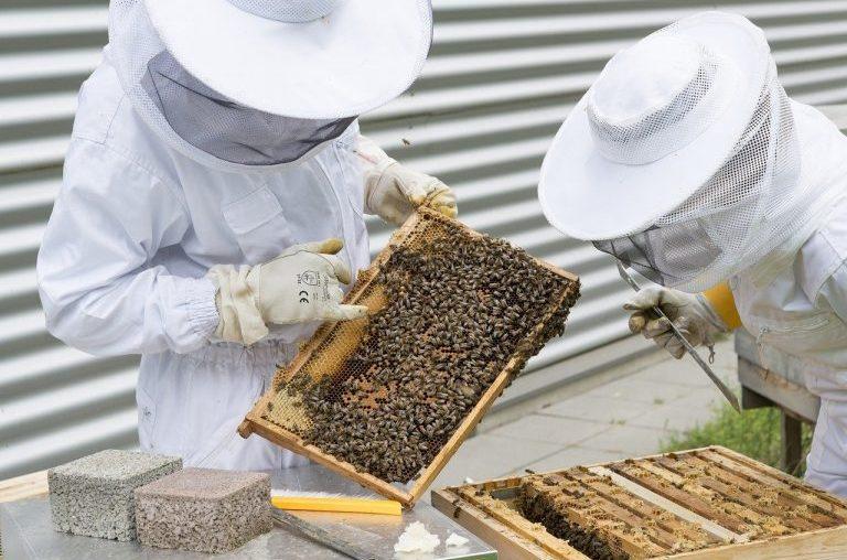 Publicadas las bases de la futura convocatoria de ayudas a biodiversidad en apicultura