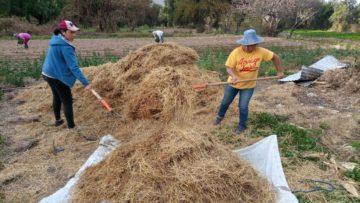Entrevista a Nila Jerez Salinas y Ana Jerez Cruz, beneficiarias del proyecto piloto de cultivo de champiñón en Bolivia